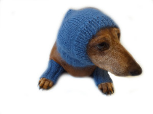 Leggings and hat set for dogs from mohair, leggings and hat for dachshund, warm head and paws for dogs, Dog Legwarmer