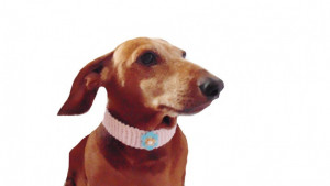 Collar for dog or cat, knitted, collar for dog,collar for cat, decoration of dog,decorative collar,gift collar for dog