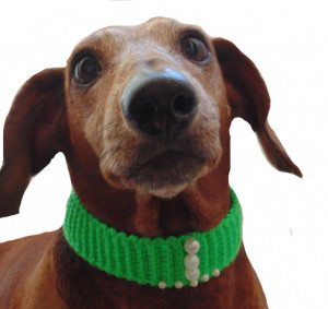 Collar for dog or cat, knitted, collar for dog, collar for cat, decoration of dog, a decorative collar, gift collar for a dog