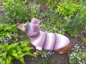 Wiener sweater and hat, Doxie sweater and hat set, clothes for small dog of dachshund