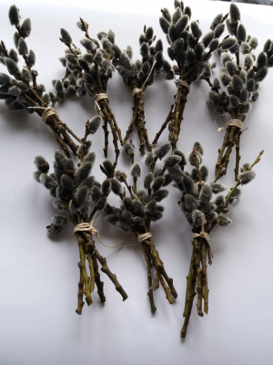 Dried Pussy willow branches.Twigs Catkins,Spring decor,easter decor,pussywillow stems,dried flower bouquet,real pussy willow,easter willow