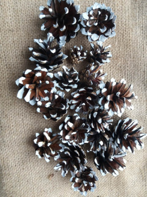 Christmas Pine cone, white pine cones,Snow tipped Pine Cone,wers Rustic Winter Wedding Pack of 30