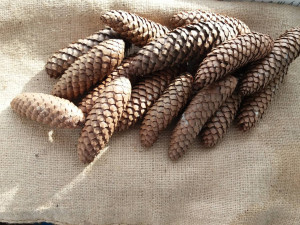 natural spruce cone, 50 pine cone, christmas tree ornament, rustic home decor, primitive woodland, wedding, favor wreath, diy craft supplies