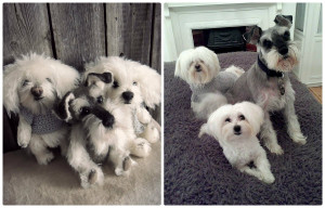 Teddy dog. Portrait your pet. Artist teddy bears. Stuffed animal by photo. Portrait your pet. Easter. Animalistic gifts
