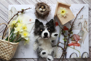 Border Collie dog custom portrait, fluffy stuffed animal, collectible art doll, realistic personalized toy, pet loss gift