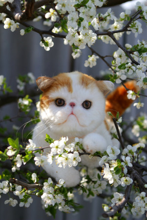 Exotic Shorthair cat personalized portrait, custom cute plush toy, memory gift, stuffed animal by photo, kitten art doll, handmade artwork