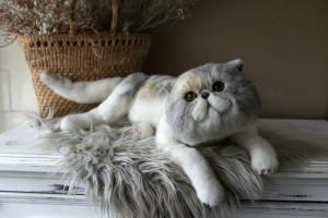 custom pet portrait, Exotic Shorthair cat, personalized plush toy, stuffed animal by photo
