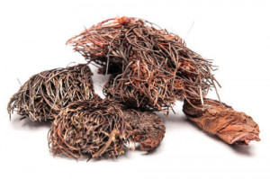 Rhodiola quadrifida Root, Dried RHODIOLA Root