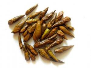 Balm of Gilead buds, Gilead whole buds, dried Black Poplar bud