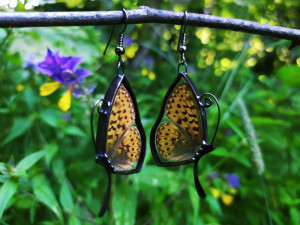 Real butterfly earrings Natural butterflies in glass, Real butterfly wings, Insect jewelry Stained glass earrings, Entomology gift for her