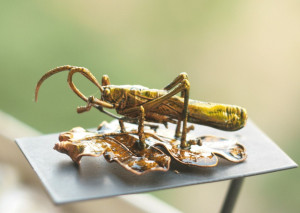 Grasshopper statue, real insect copper-plated, metal plated real bug, electroformed hopper home decor, geekery gift, 置物 okimono